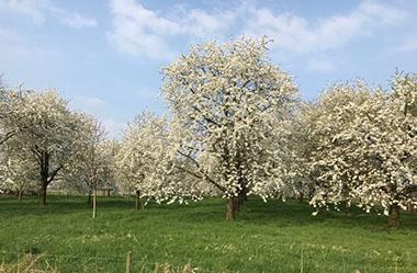 Bereid uw fruit en vruchtbomen voor op de wintervorst